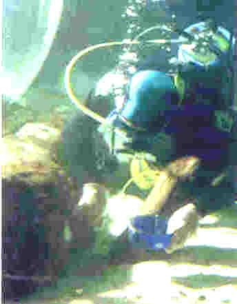 Splash Zone A 788 Underwater Epoxy